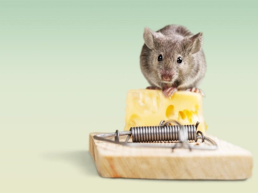 ネズミ退治 犬
