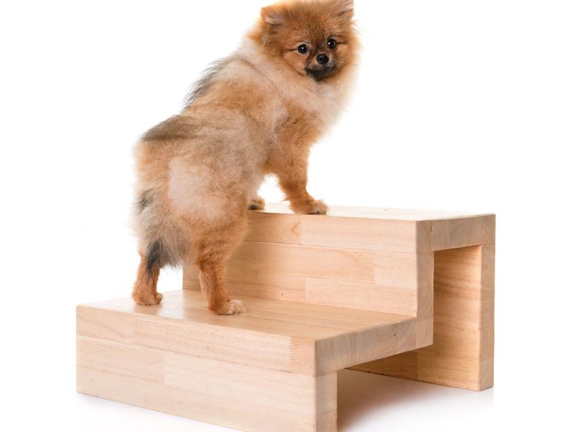 「階段 犬」の画像検索結果